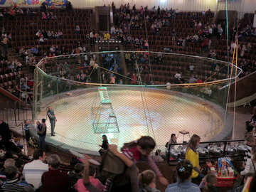 Net of circus tigers №15861