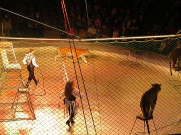 Menschen in den Käfig mit den tigers №15839
