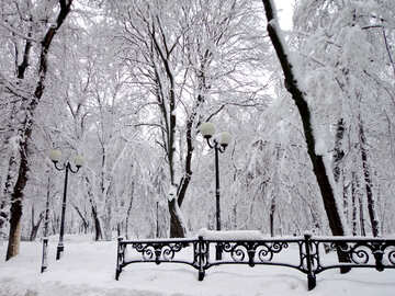Winter Park №15606