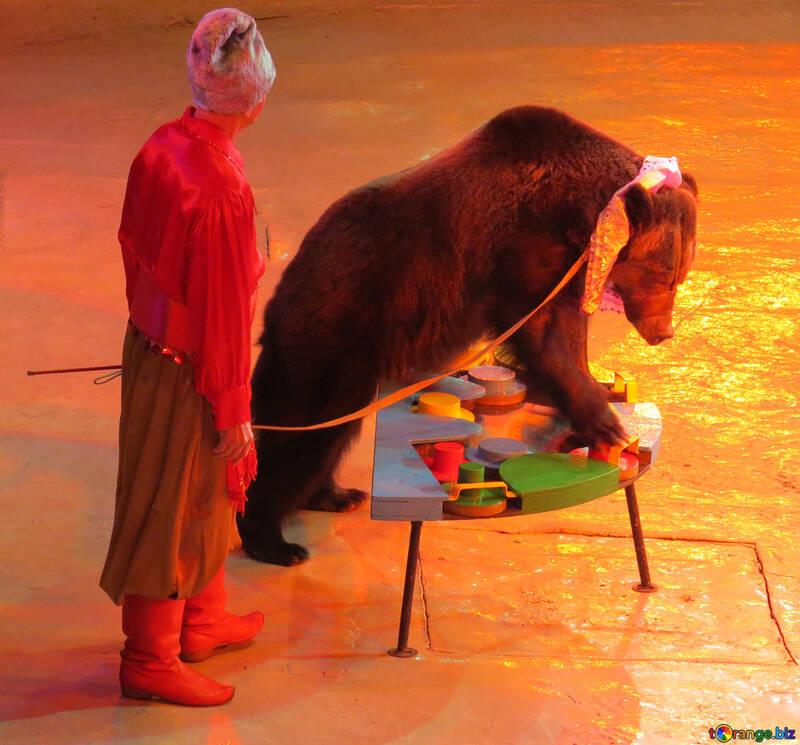 Bear at the circus №15797