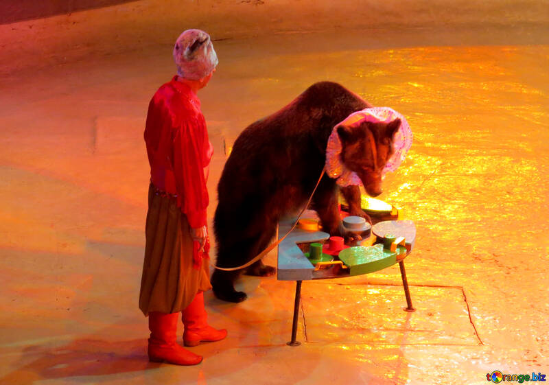 Circus Bear №15799