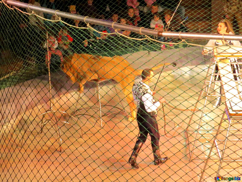Circus lion №15828