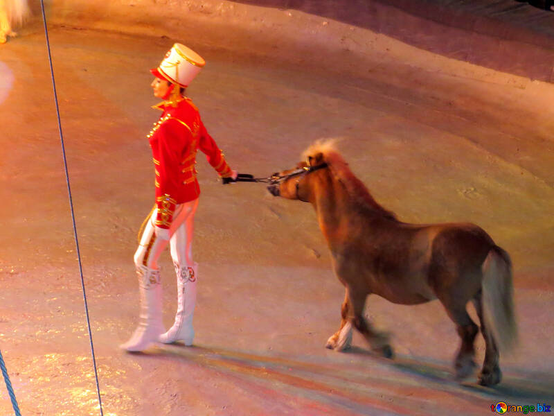 Circus Pony №15778