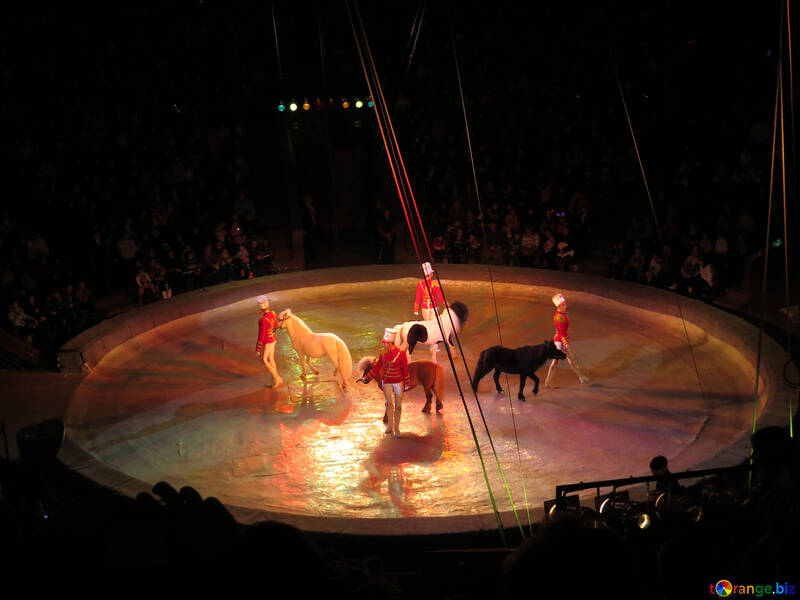 Circus with pony №15783