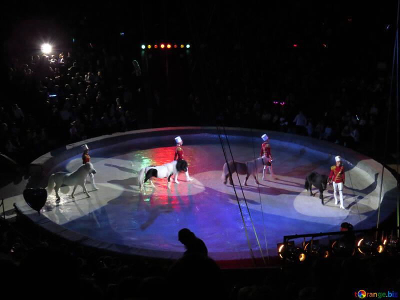 Circus pony №15784
