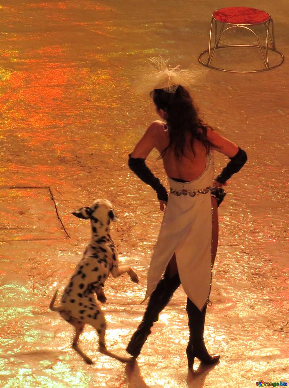 Dog dancing №15770