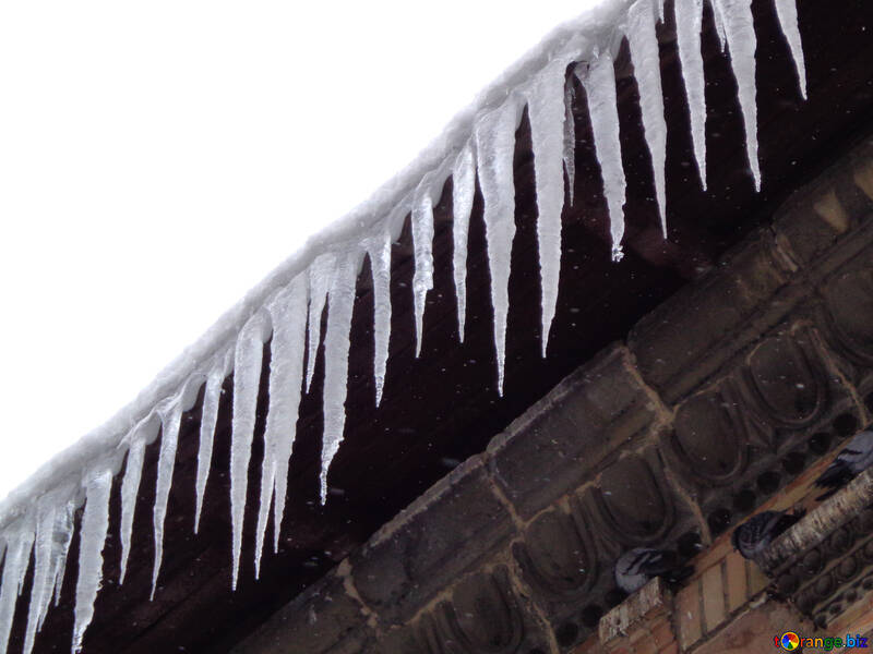 Icicles and poultry №15598