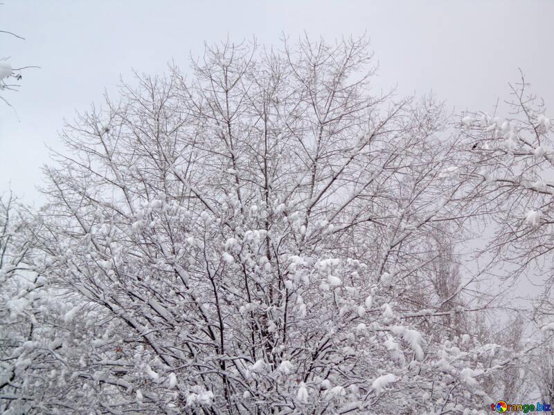 Snowy tree №15579