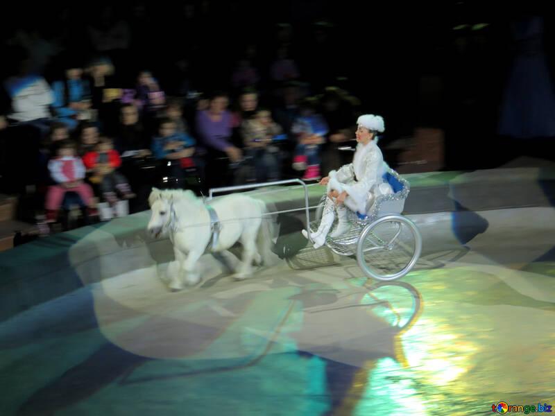 Pony driven trolley №15753