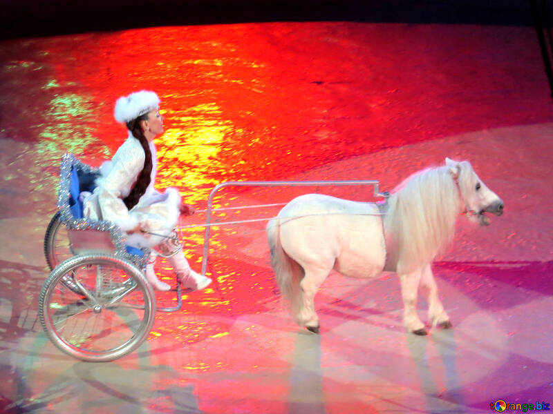 Pony harnessed to cart №15752