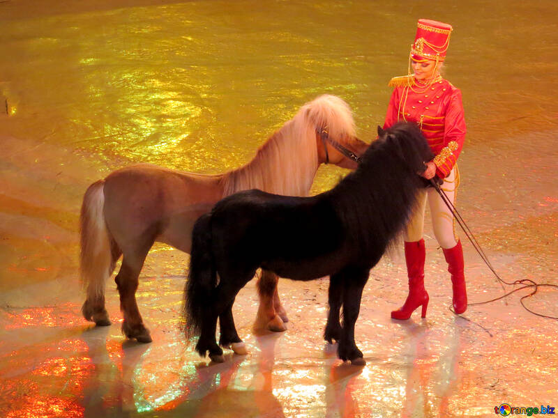 Show with ponies №15774