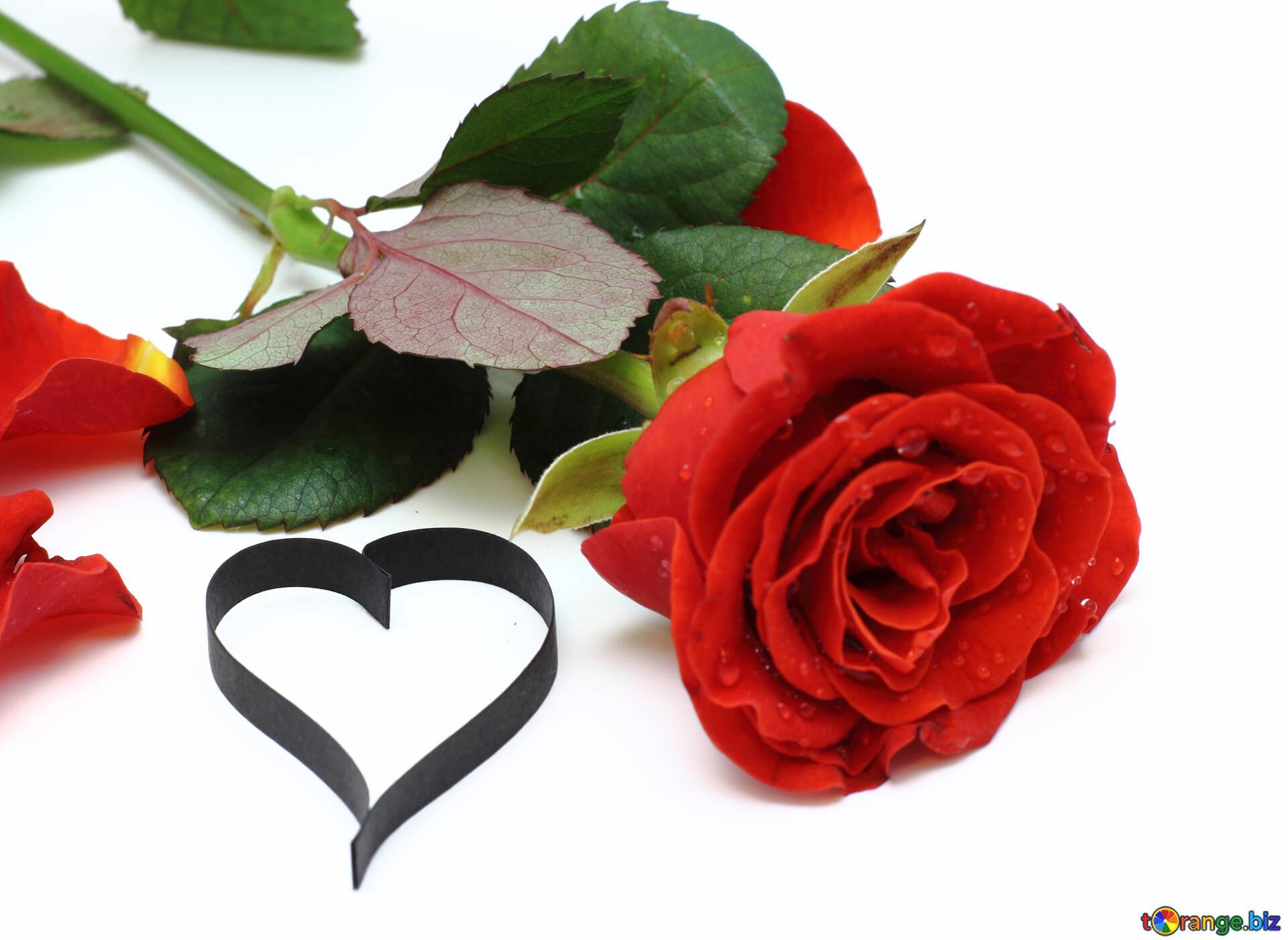 Картинки сердечки и розы, рождественскую