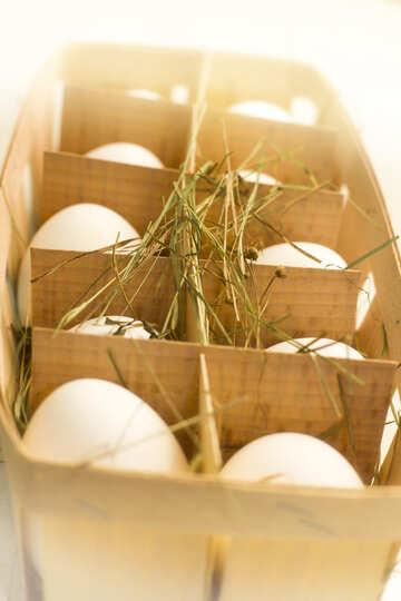 Eggs №16489