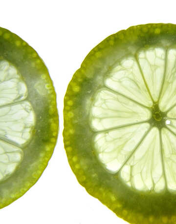 Lemon slices №16161