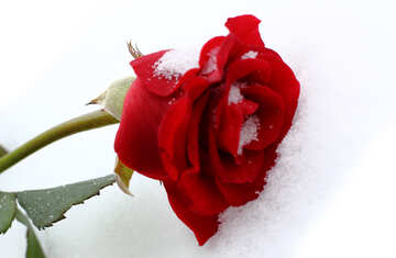 Red background with snow №16969