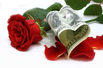 Favorite Roses №16837