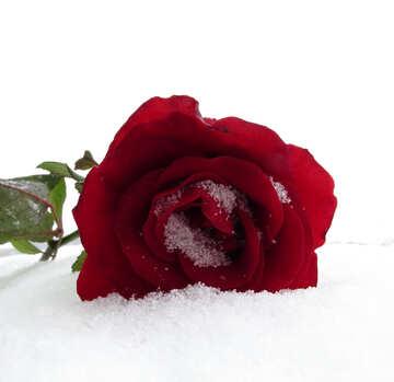 Sfondo di neve rosa №16961
