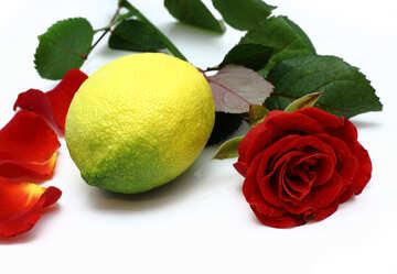 Zitrone und Rose №16844
