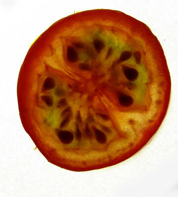 Slice of tomato №16708