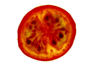 Tomato on clearance №16707