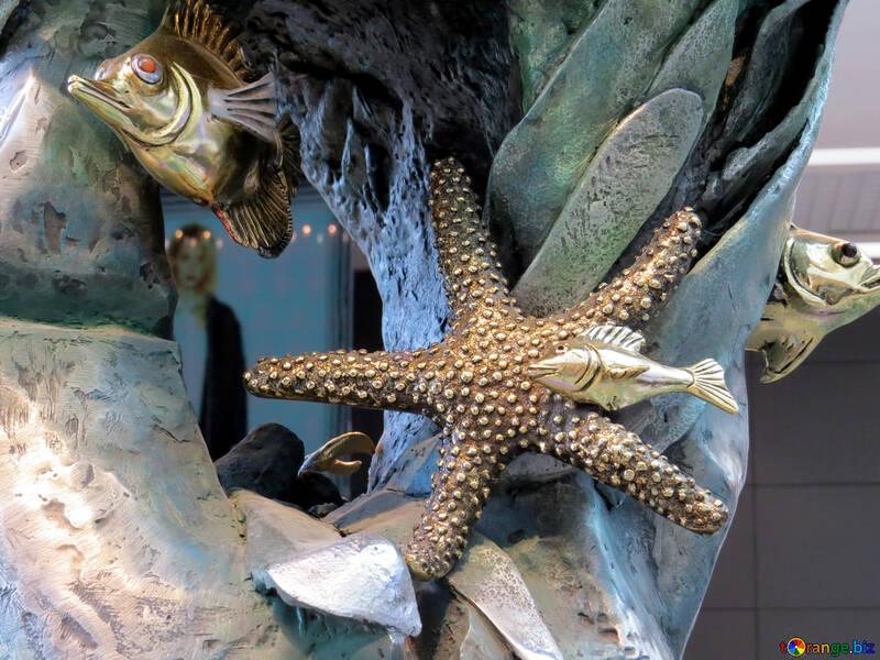 Starfish №16548
