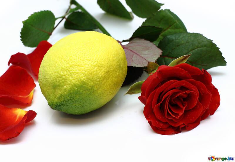 Limón y Rosa №16844