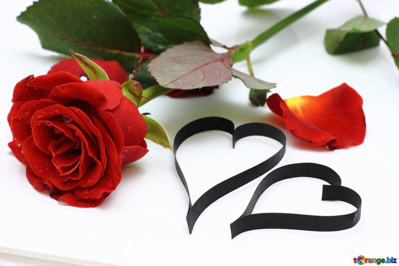 Rosa y dos corazones №16850