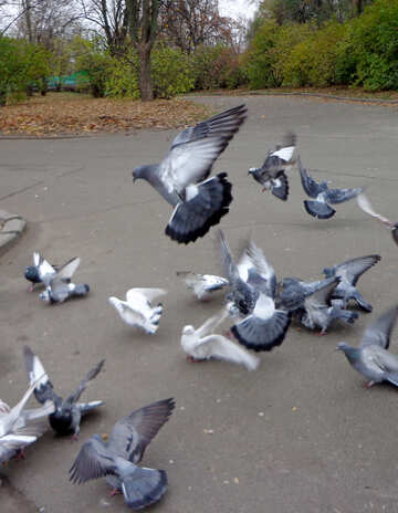 Pigeons in the Park №17691