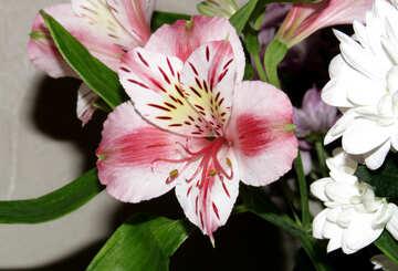 Bouquet con al′strëmeriej №17809