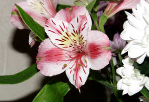 Bouquet with al′strëmeriej №17809