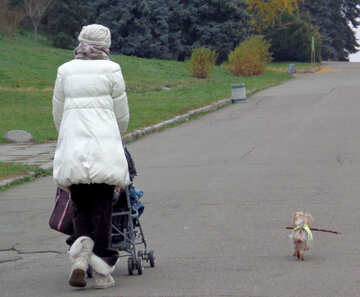 Walking the dog and the child in the stroller №17682