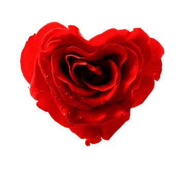 Роза сердце №17029
