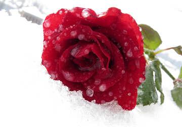 Snow on the desktop №17017