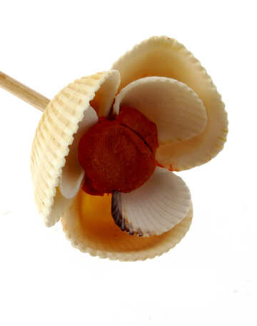 Цветок ракушки пластилин №17317