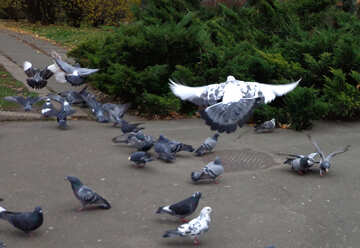 Pigeons in the city №17690