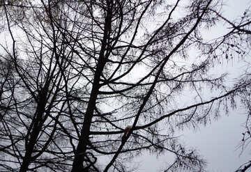 Eichhörnchen auf Baum №17680