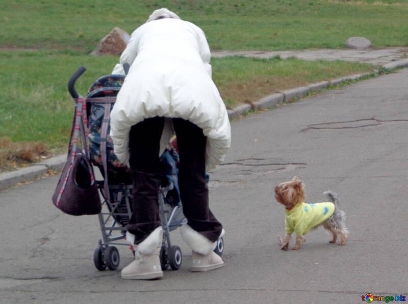 Fashionable Dog №17683
