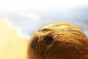 Cocoanut №18790