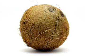 Cocoanut №18800