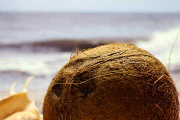Coconut №18788