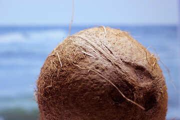 Coconut №18791