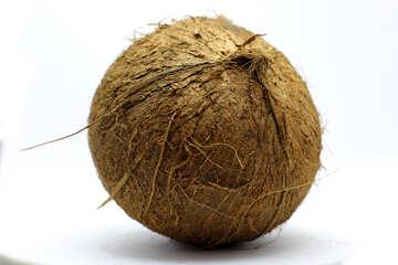 Coconut №18796
