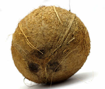 Coconut №18799