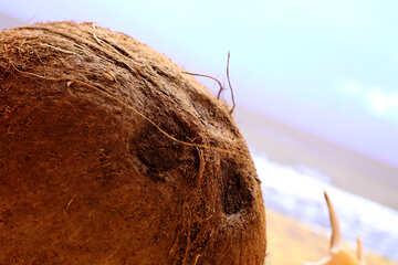 Coconut on the beach №18783