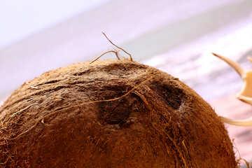 Coconut on the beach №18784
