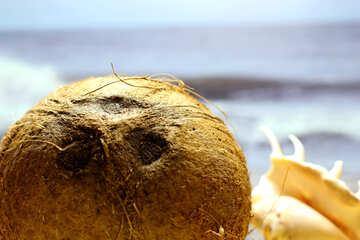 Coconut on the beach №18787