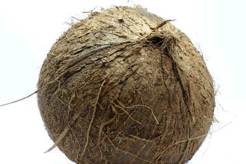 Coconut on white background №18795