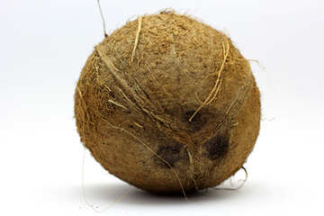 Coconut on white background №18798