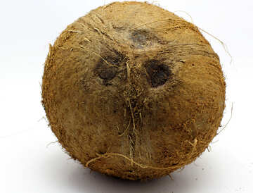 Coconut without background №18793