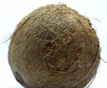 Coconut without background №18794